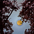 Big Old Autumn Moon by Bill Cannon
