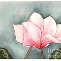 Big Pink Cyclamen by Hilda Wagner