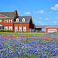 Big Red House On Bluebonnet Hill by Lynn Bauer