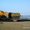Big Rock On San Simeon Beach by Denise Mazzocco