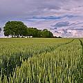 Big Sky Montana Wheat Field  by Movie Poster Prints