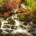 Big Spring In Sheep Creek Canyon by Dennis Hammer