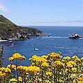 Big Sur Loves Yellow By Diana Sainz by Diana Raquel Sainz