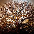 Big Tree by Ryan Dove