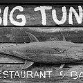 Big Tuna by Cynthia Guinn
