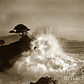 Big Wave Hitting The Lone Cypress Tree Pebble Beach California 1916 by California Views Archives Mr Pat Hathaway Archives