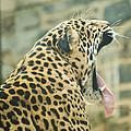 Big Yawn by Trish Tritz