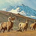 Bighorn Below Electric Peak by Paul Krapf