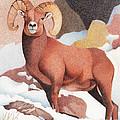 Bighorn Sheep Winter by Dan Miller