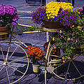 Bike Planter by Garry Gay