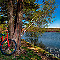 Biking To Horseshoe Lake by Mark Miller