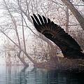 Bilbow's Eagle by Bill Stephens