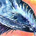 Bill Of Ani by Ashley Kujan