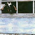 Bill's Goat by Pauline Walsh Jacobson