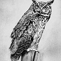 Bill's Great Horned Owl by Brian Wylie