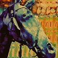Billy Blue by Devalyn Marshall