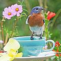 Billy Bluebird Having Tea by Luana K Perez