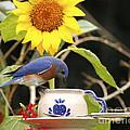 Bluebird And Tea Cup by Luana K Perez