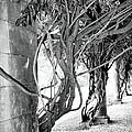 Biltmore Arbor Asheville Nc by William Dey