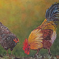 Biltmore Chickens  by Sandra Reeves