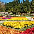 Biltmore Gardens  by Lynn Bauer