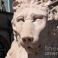 Biltmore Lion by Gayle Melges