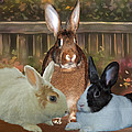 Bindy Bella And Butterscotch by Diane Bell