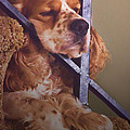 Bingo Loves His Nap On The Stairs by Debbie Portwood