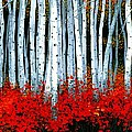 Birch 24 X 48  by Michael Swanson