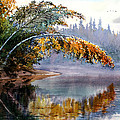 Birch Creek Beauty by Vladimir Zhikhartsev