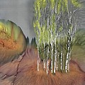 Birch Grove 1 by Carolyn Doe