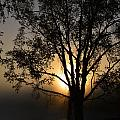 Birch In Silhouette by Thomas Phillips