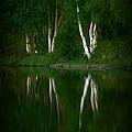 Birch Reflection by Rick  Monyahan