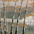 Birch Stand by John Wyckoff