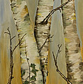 Birch Trees by Alan Pickersgill