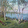 Birch Trees By The River by Ylli Haruni