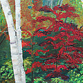 Birch Trees In Red by Frankie Picasso
