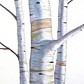 Birch Trees In Three by Christopher Shellhammer