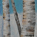 Birch Trees by Sally Rice