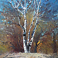 Birch Trees by Ylli Haruni