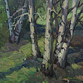 Birches by Diane McClary
