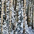 Birches In The Winter by Dragica  Micki Fortuna