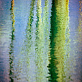 Birches Reflections II by Silvia Ganora
