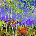 Birchtrees 56412 by Pol Ledent