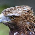 Bird 1 by GK Photography
