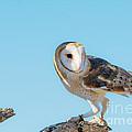 Bird 11 by Larry White
