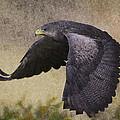 Bird 3 by Ingrid Smith-Johnsen
