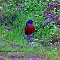 Bird 3 by Karl Rose