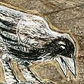 Bird 3 by Matthew Howard