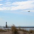 Bird And Lighthouse by Linda Kerkau